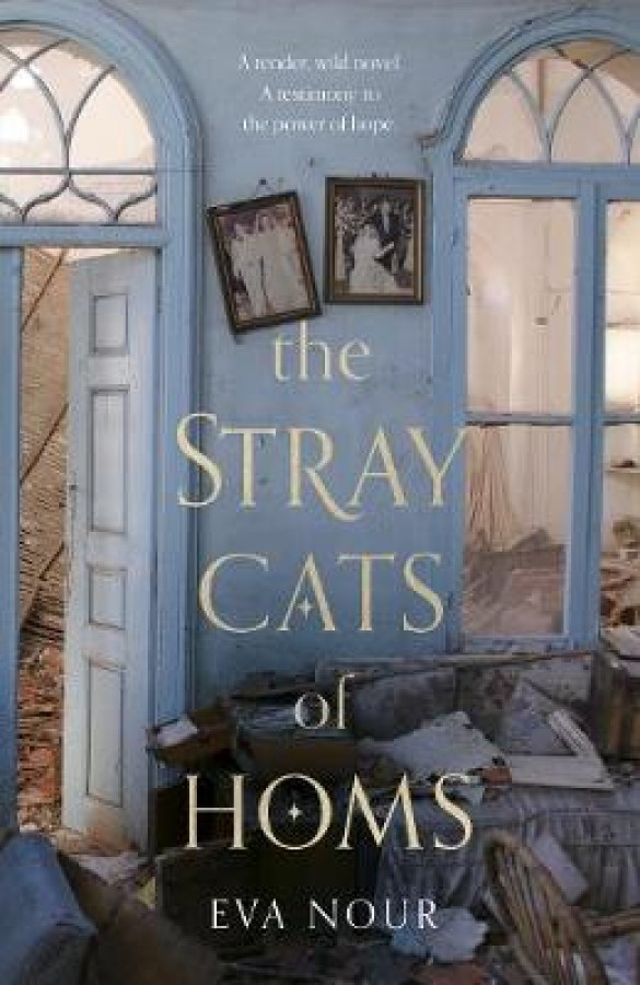 The stray cats of hom