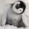 Pinguin07